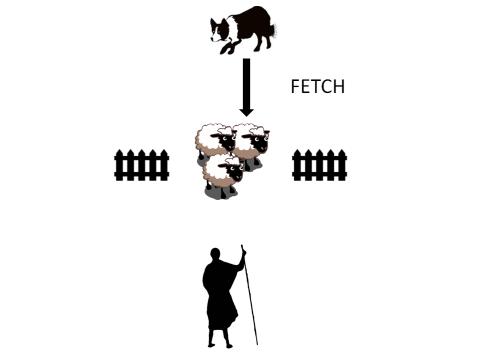fetch, šola psov za zganjanje ovc, paša psov z ovcami, šola za pse slovenija